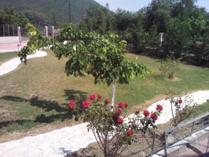 parga-sunnysea-apartments16